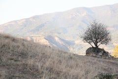 在山的偏僻的树 免版税库存照片