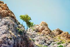 在山的偏僻的绿色树 免版税库存照片