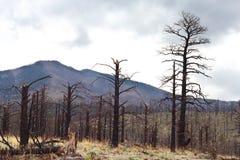 在山的停止的结构树 免版税库存照片