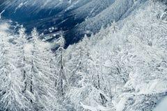 在山的冬天树 库存图片