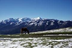 在山的冬天横向 与一匹马的美好的风景在一个晴天 免版税库存图片