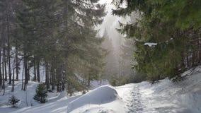 在山的冬天足迹 库存图片