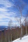 在山的冬天风景,与桦树的多雪的倾斜在狂放的晴天 库存照片