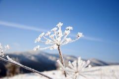 在山的冬天,莳萝包括霜 免版税图库摄影