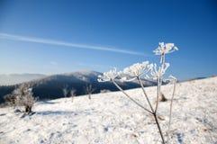 在山的冬天,莳萝包括霜 免版税库存照片
