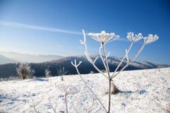 在山的冬天,莳萝包括霜 库存照片