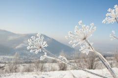 在山的冬天,莳萝包括霜 图库摄影