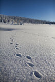 在山的冬天 库存图片