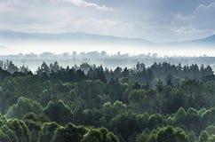 在山的剧烈的日出与有薄雾的厚实的常青树为 图库摄影
