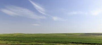 在山的培养的领域Gobustan (阿塞拜疆) 库存图片