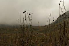 在山的多云谷 免版税图库摄影