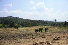 在山的大象 库存照片