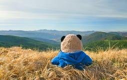 在山的孤独的玩具熊 库存照片