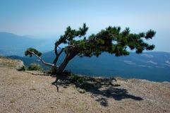 在山的孤立结构树 库存照片