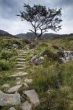 在山的孤零零树和小径在夏天环境美化 库存图片