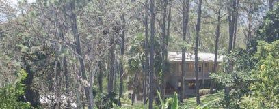 在山的客舱,围拢由杉木森林多米尼加共和国, 库存图片