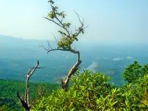 在山的小树 免版税库存照片
