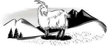 在山的山羊 免版税库存图片