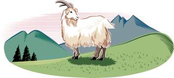 在山的山羊 免版税库存照片