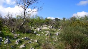 在山的岩石土壤,树增长 开花结构树 影视素材