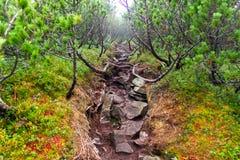 在山的岩石路 库存照片