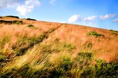 在山的干燥和高草 库存照片
