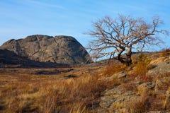 在山的干燥树 免版税库存照片
