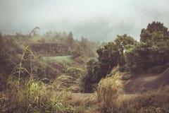在山的干草领域 免版税库存照片