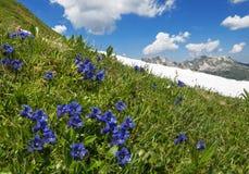 在山的开花的植物 图库摄影
