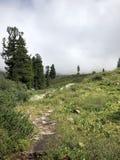 在山的强的雾在夏天 免版税库存图片