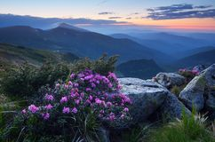 在山的微明在夏天 免版税库存照片