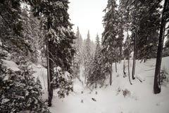 在山的恶劣天气 33c 1月横向俄国温度ural冬天 与暴风云的多云晚上 喀尔巴汗,乌克兰,欧洲 库存照片