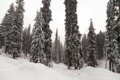 在山的恶劣天气 33c 1月横向俄国温度ural冬天 与暴风云的多云晚上 喀尔巴汗,乌克兰,欧洲 免版税图库摄影