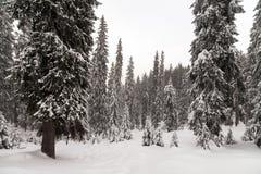 在山的恶劣天气 33c 1月横向俄国温度ural冬天 与暴风云的多云晚上 喀尔巴汗,乌克兰,欧洲 库存图片