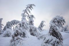 在山的恶劣天气 33c 1月横向俄国温度ural冬天 与暴风云的多云晚上 喀尔巴汗,乌克兰,欧洲 免版税库存图片