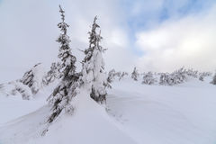 在山的恶劣天气 33c 1月横向俄国温度ural冬天 与暴风云的多云晚上 喀尔巴汗,乌克兰,欧洲 图库摄影