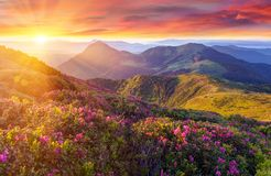 在山的惊人的五颜六色的日落与庄严阳光和桃红色杜鹃花在前景开花 剧烈的五颜六色的场面 免版税库存照片