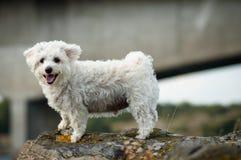 在山的愉快的狗 免版税库存照片