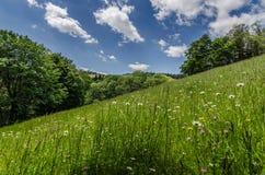 在山的新鲜的草 免版税图库摄影