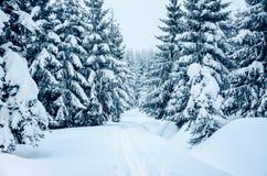 在山的新鲜的雪盖的树,当速度滑雪时 免版税库存图片