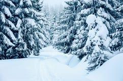 在山的新鲜的雪盖的树,当速度滑雪时 库存图片
