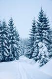 在山的新鲜的雪盖的树,当速度滑雪时 图库摄影