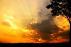 在山的日落与树和鸟 免版税库存图片