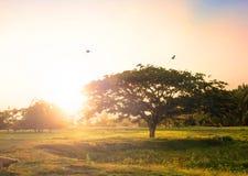 在山的日落时间与大树和鸟 库存图片