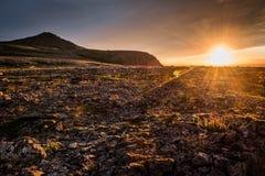 在山的日落,花金黄口气和草在寒带草原 免版税库存图片