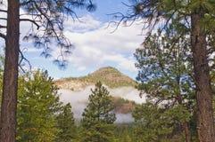 在山的早晨雾 免版税库存照片