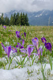 在山的春天花 免版税图库摄影