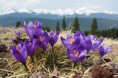 在山的春天花 免版税库存图片