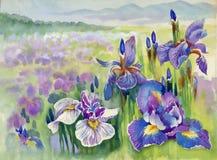 在山的春天紫罗兰色花 库存照片