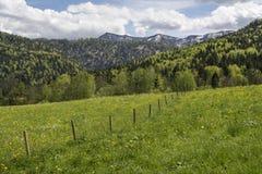 在山的春天 免版税图库摄影